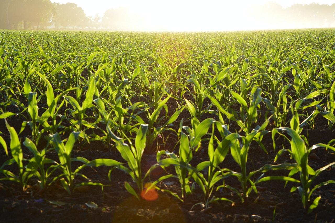 Crecen 4,1% exportaciones de agroindustria brasileña en 2020
